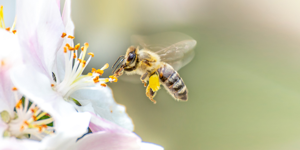 What are some tips for living with allergies to pollen?